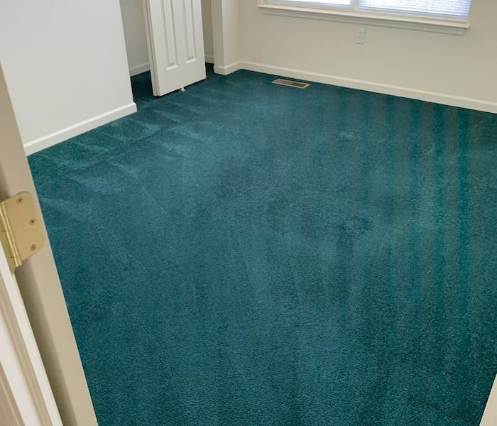 Cleaned green carpet in a room with white walls