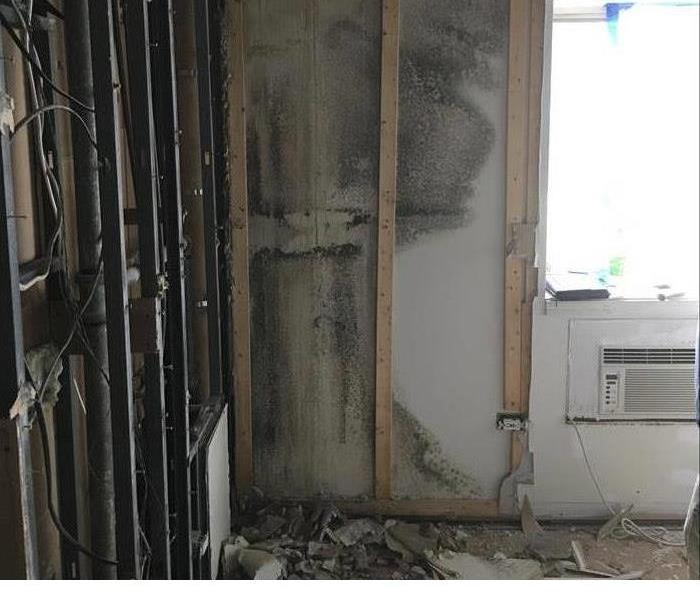 Cleaning Mold Damage
