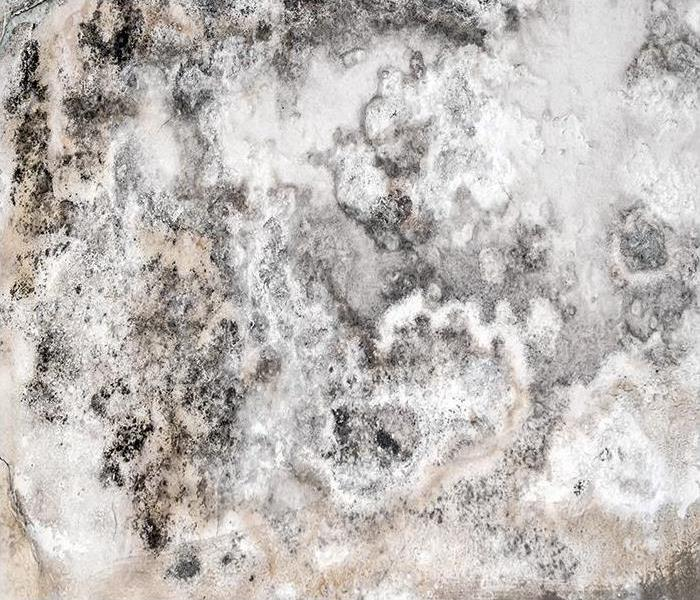 Mold Remediation Got A Mold Infestation? Let Our Team Help Restore Your Home In Reading!