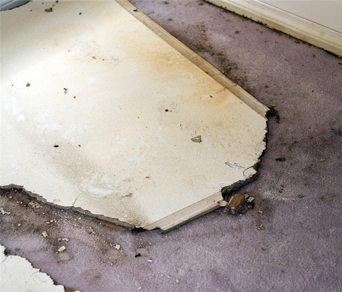 flood damaged carpet and plasterboard