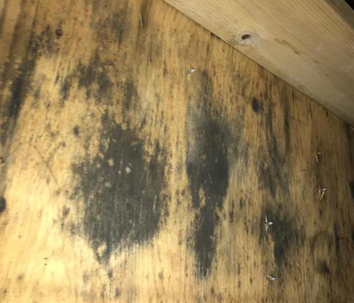 Mold Remediation The Dangers of Toxic Mold
