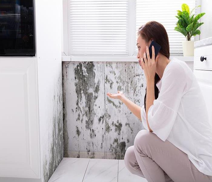 Mold Remediation You Need Our Help When Your Reading Home Is Taken Over By A Mold Infestation